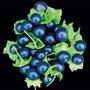 Sementes Jaltomate - Deliciosas E De Facil Cultivo Frutifera