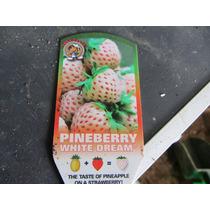 Pineberry Pineberries Morango Abacaxi Sementes Para Mudas