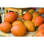 Gac Super Fruta Momordica Cochinchinensis 03 Sementes P/muda