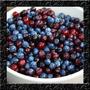 Huckleberry - Tipo De Mirtilo - Sementes De Frutas Para Muda
