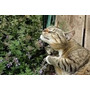 1000 Sementes De Erva Dos Gatos Catnip #mo66
