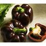 100 Semente Pimenta Habanero Chocolate + Brinde, Frete 1,00