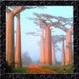 Baoba Adansonia Digitata - Sementes P/ Mudas Ou Bonsai