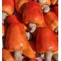 6 Sementes De Cajú - Anacardium Occidentale