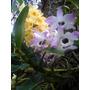 Caixa Com 6 Orquídeas Cores E Especies Diferentes Na Caixa