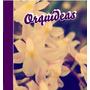 Como Cuidar De Orquídeas - 282 Páginas - Ilustrado