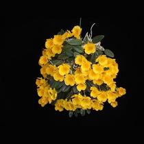 Muda De Orquídea, Dendrobium, Adulta, Lindíssima!