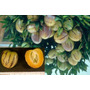 Mudas De Melão Pera (solanum Muricatum) Deliciosa Fruta Doce