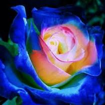 10 Sementes Dragão Azul Flor Para Bonsai Gramas Jardins