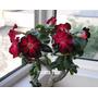 10 Sementes Rosa Do Deserto Adenium Cores Diversas Flor Mix