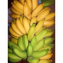 Kit Super Bananas Prata Pão Anã Jardim 3 Mudas Rizomas