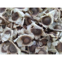 100 Sementes De Moringa Oleifera (a Árvore Da Vida )