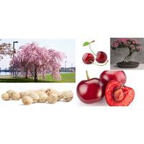 10 Sementes De Sakura - Frete Grátis/bonsai/orquídea/muda
