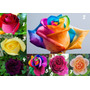 56 Sementes Rosa Rara Exótica 2 De Cada Cor + Frete Grátis
