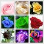 45 Sementes De Rosas Lindas E Raras - Frete Grátis