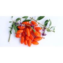 200 Sementes Fruta Goji Berry Importadas + Frete Gratis