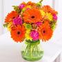 Gerbera Flor Sementes Para Mudas + Brinde