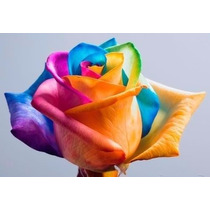 Sementes Rosa Rainbow Arco Íris + A Mais Bela De Todas