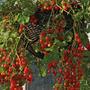 Tomate Cereja Samambaia Red Sementes Flor Pra Mudas