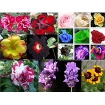 Kit Com 65 Sementes De Rosas E Orquídea Raras - Frete Grátis