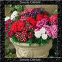 Verbena Híbrida Sortida Sementes Flor Para Mudas