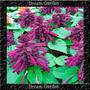 Salvia Splendens Amore Lavanda Sementes Flor Pra Mudas
