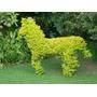 Pingo Brinco De Ouro Para Esculturas Muro Verde 200 Sementes