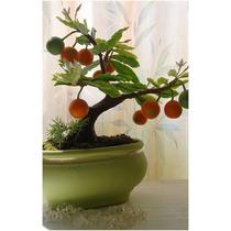 5 Sementes De Laranja - Frete Grátis/bonsai/orquídea/muda
