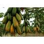Sementes De Mamão Formosa Gigante + Maracuja - Frete Gratis