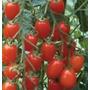 Sementes De Tomate Sweet Grape ( Tomatinho Doce) 25 Sementes
