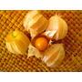 100 Sementes De Physalis Amarela ( Physalis Pubescens )