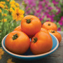 Tomate Orange Wellington Sementes Fruta Legumes Para Mudas