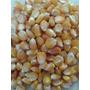 Sementes De Milho Catête Para Plantio 3 Kg