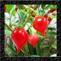 Pimenta Biquinho Vermelha Sementes Para Mudas