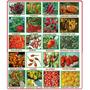 As Pimentas Mais Forte Do Mundo - Kit Com 35 Especies