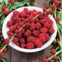 Espinafre Morango 2x1= Fruta E Hortaliça Sementes Para Mudas