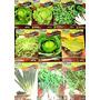 Kit Sementes 10tipos Horta Verduras E Temperos .promoção