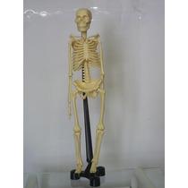 Esqueleto Humano 46cm Em Resina Plástica - Sk046im