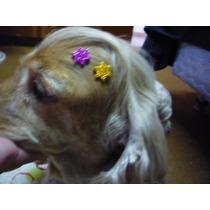 Laços P/ Pet. 200peças Pequenas Piercing Eva Laçinhos