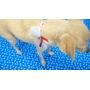 Moda Pet- 10 Gargantilhas Com Laço Para Cães E Gatos Petshop