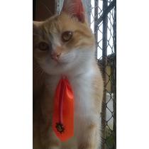 Gravatas Pet P/ Cães E Gatos, Pet Shop