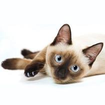 Capas Protetoras De Silicone Para Unhas De Gatos