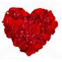 3.000 Pétalas De Rosas Artificiais Vermelhas - Flores Noivas