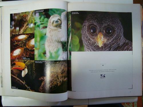 Livro - Brasil O Livro Dos 500 Anos - Caras