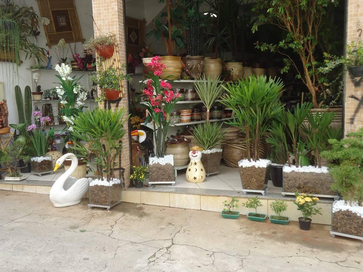 arvore manaca jardim:Manaca Da Serra Diversos Tamanhos – R$ 45,00 no MercadoLivre