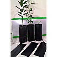 100 Saquinhos De Muda Plantar Semente Saco Mudas
