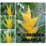 Heliconia Caribea Amarela - Flores Tropicais