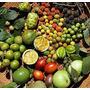 Frutíferas Exóticas E Silvestres Mudas No Rj