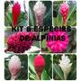 Kit 8 Espécies De Alpínias - Flores Tropicais