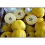 Muda Grande Da Fruta Marmelo, Quince, Marmeleiro